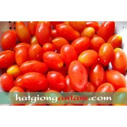 Hạt giống cà chua bi đỏ cherry F1