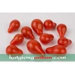 Hạt giống cà chua bi lê đỏ