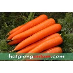 Hạt giống cà rốt F1