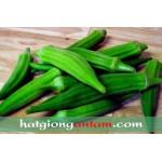 Hạt giống cải bắp xanh