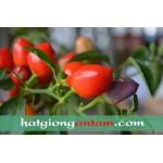 Hạt giống ớt trái đào tiên