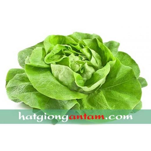 Hạt giống rau xà lách cuộn