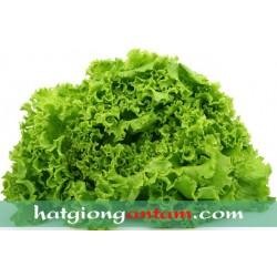 Hạt giống rau xà lách xoăn xanh