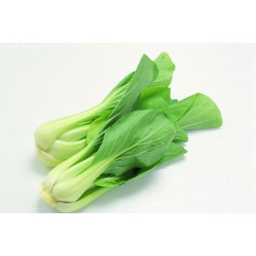 Hạt giống rau cải chíp( cải thìa)